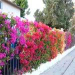 Natural Houseplant Food