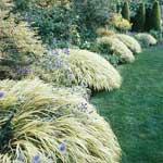 42-Hakonechloa-macra-'Aureola'-Japanese-Forestgrass